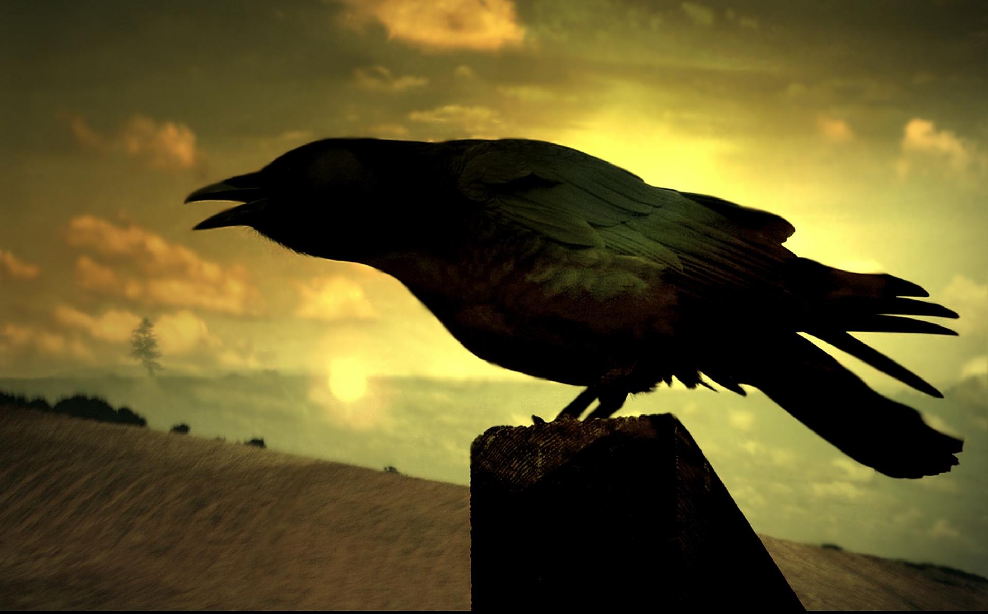 Il simbolismo del corvo tra magia e predizione